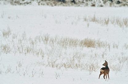 Foto: Reegeit in de sneeuw