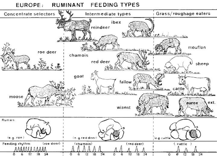 Figuur 2: Wilde herbivoren ingedeeld naar voedselstrategie