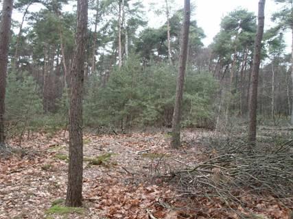 Afbeelding: Geïntegreerd bosbeheer naar naaldhout
