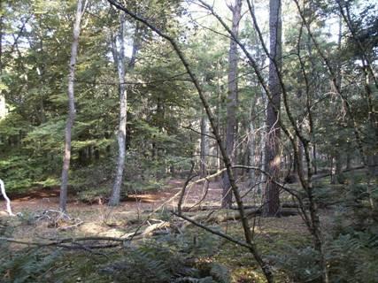 Afbeelding: Geïntegreerd bosbeheer naar loofhout