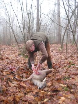 Afbeelding: Ree ontweiden in Staatsbossen