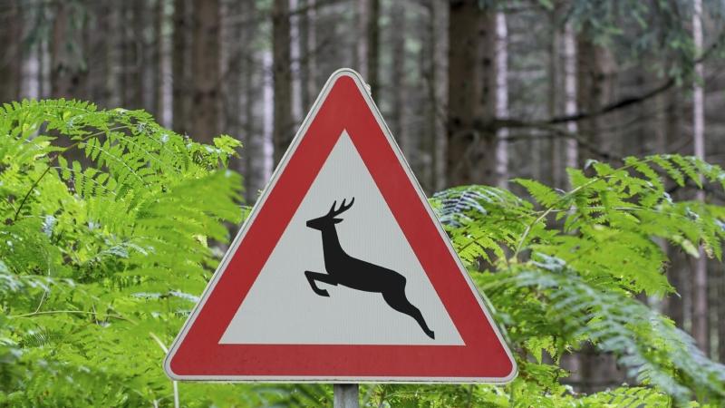 Afbeelding: Verkeersbord overstekend wild