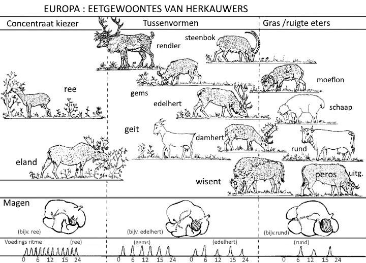 Afbeelding: Europese herkauwers naar voedseltype naar Hofmann 1976