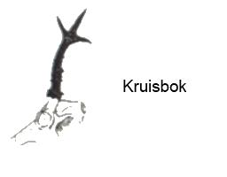Afbeelding: Zijaanzicht geweistang reebok met tegenoverstaande stangen, een kruisbok