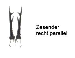 Afbeelding: Vooraanzicht geweistangen reebok van een recht parallel gewei.