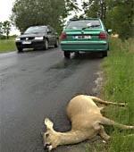 Afbeelding: Hulpverlenen slachtoffers wildaanrijding